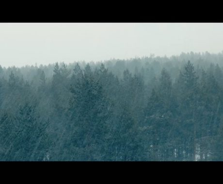 Forest video Finland